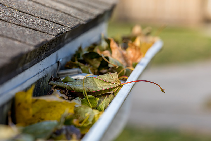 Leaves clogging a gutter in Fall in the Denver metro Area